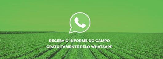 Informe pelo WhatsApp