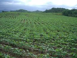 Feijão produzido por agricultores familiares na Zona da Mata é testado