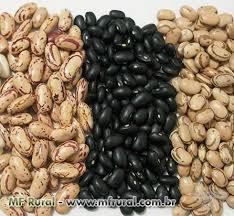 O pregão desta segunda-feira (27) abriu com um volume regular de aproximadamente 23.360 sacas de feijão carioca.