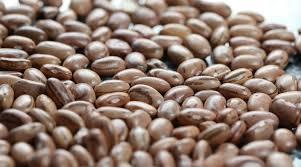 Por falta de giro nas gôndolas, o mercado de feijão carioca voltou a calmaria nas vendas, pressionando os preços.