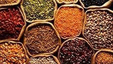 A colheita de grãos no Rio Grande do Sul está praticamente encerrada, com a soja atingindo 99% da área