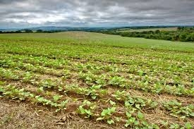 Na região Sudoeste, principal produtora do Estado e onde há mais lavouras a serem colhidas, estragos foram significativos - See more at: http://www.sistemafaep.org.br/chuvas-trazem-prejuizo-para-o-fei