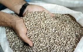 Com oferta de feijão carioca, se aproximando de 40 mil sacas, os preços voltaram a recuar no pregão desta segunda-feira.