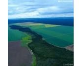 A colheita no sudoeste paulista já está em andamento há pelo menos três semanas. Além disso, os bons resultados em termos de qualidade dos grãos é algo que podemos destacar.