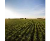 Área coberta com seguro rural já supera 10 milhões de hectares