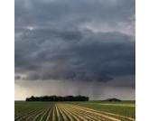 Ausência de chuvas regulares preocupa produtores de SP