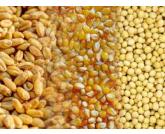Conab lança nesta terça-feira ferramenta de acompanhamento do plantio e coleta de grãos