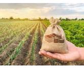 Daoud: Inflação e forte recessão econômica já sinalizam um difícil cenário para 2022