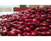 Epamig produz semente genética do feijão 'ouro vermelho' em Leopoldina