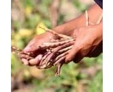 Governo publica lei que reduz ICMS para 5% nas saídas interestaduais de feijão