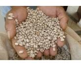 Mercado na zona cerealista, segue com vendas tímidas e setores cautelosos nas negociações