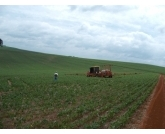 No estado do Paraná a primeira safra de feijão carioca e preto já está com 100% colhido, segundo informações do DERAL ? Departamento de Economia Rural.