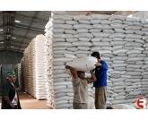 O pregão desta segunda-feira (28) abriu a semana com uma oferta de aproximadamente 17 mil sacas do feijão carioca, um volume considerado razoável e suficiente para manter a intenção de reajuste de preços, algo que já vem ocorrendo desde os últimos pr