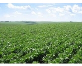 Produção de 246 milhões de toneladas garante o recorde da safra de grãos