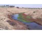 Produtores de Campos de Holambra reduzem área plantada devido à seca extrema