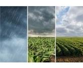 Santa Catarina ? Colheita em andamento Neste momento, o estresse hídrico se espalha por toda a região Sul.